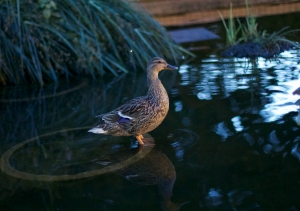 How about instead of a photo of this game you just accept this photo of a duck and ask no questions. Good.